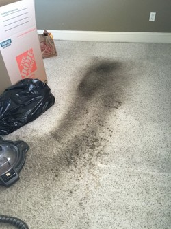 Before Carpet Cleaning by Russell Janitorial